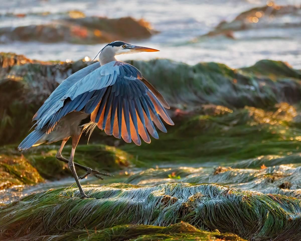 Coastal Amateur Photography Contest